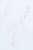 Wintery background Stock Photography