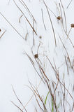 Wintery background Royalty Free Stock Image