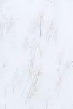 Wintery background Stock Photo