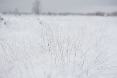 Wintery background Royalty Free Stock Photography