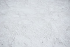Wintery background Royalty Free Stock Photos