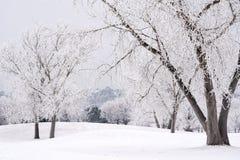 Wintery Day in Colorado Stock Image