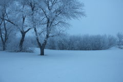 Wintery Farmscape Stock Image