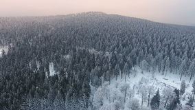 Wintery forest and hoar frost stock video