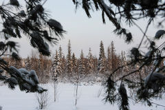 Wintery forest. Royalty Free Stock Photos