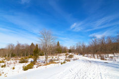 Wintery forest on a sunny day. Stock Photos