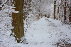 Wintery Forest Trail in Huron County, Ontario, Canada stock photography