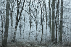 Wintery frosted Forest Stock Images