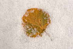 Wintery golden leaf. A golden leaf covered in frost Stock Images