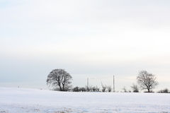Wintery landscape. With trees in Scotland Royalty Free Stock Photo