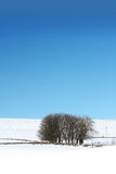 Wintery landscape. With trees and blue sky in Scotland Stock Image