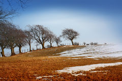 Wintery landscape. With trees in Scotland Stock Photos