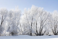 Wintery Landscape Royalty Free Stock Images