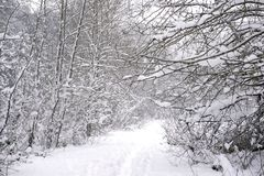 Wintery landscape under a snow storm in Vancouver Island stock photo