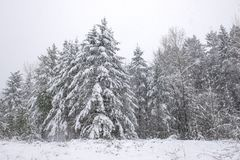 Wintery landscape under a snow storm in Vancouver Island stock photos