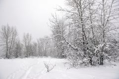 Wintery landscape under a snow storm in Vancouver Island stock images