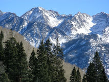 Wintery Mix. Pines, bare Aspens and snowy peaks in the Colorado Rockies royalty free stock photography