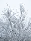 Icy Snow Covered Tree Royalty Free Stock Photography