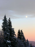 Wintery Moonrise. Full moon above snowy tree at sunset stock images