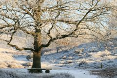 Wintery oak tree and bench Royalty Free Stock Photo