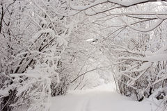 Wintery path Royalty Free Stock Photo