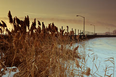 Wintery Pier. Dawn along the shores of Lake Erie including grasses and a long pier Royalty Free Stock Images