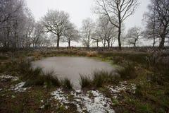 Wintery pond Royalty Free Stock Photos