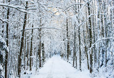 The wintery road Royalty Free Stock Photo