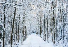 The wintery road Royalty Free Stock Photo