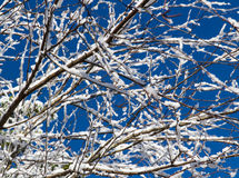 Wintery Snowfall on Tree Branches Royalty Free Stock Photos