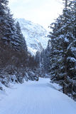Wintery snowy path with trees and mountain in Stubai Alps mountains Stock Photo
