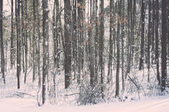 Wintery trees in Boston Massachusetts Stock Photography