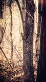 Wintery trees in Boston Massachusetts royalty free stock photo