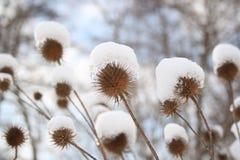 Winterzeit Lizenzfreies Stockbild