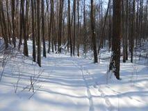 Winterzeit im Wald Lizenzfreie Stockfotografie