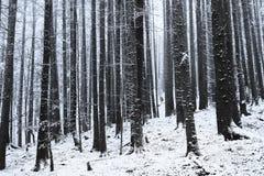 Winterzeit innerhalb des Waldes an einem nebelhaften Tag Stockfotografie