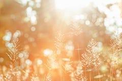 Winterzeitmorgen, heller Sonnenaufgang, der durch einen Wald auf wilden Blumen gl?nzen und Spinnennetz Sch?nes transparentes und  lizenzfreie stockfotografie