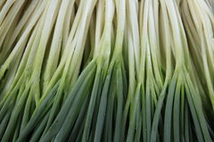 Winterzwiebel auf dem Gebiet, Liliaceae Lizenzfreie Stockfotografie