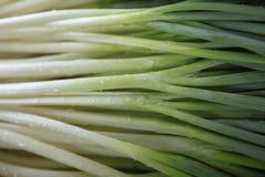 Winterzwiebel auf dem Gebiet, Liliaceae Lizenzfreies Stockfoto