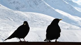 Winther birds Royalty Free Stock Image
