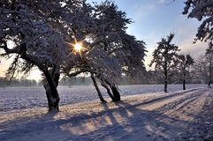 Winther sun Royalty Free Stock Images