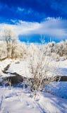 Wintre landscape Royalty Free Stock Photo