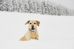 Wintry adventure Royalty Free Stock Images