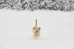 Wintry adventure Royalty Free Stock Photos