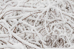 Wintry background Royalty Free Stock Image