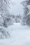 Wintry countryside road and hoar-frost on trees in winter Stock Photography