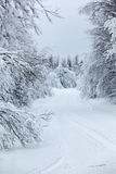 Wintry countryside road and hoar-frost on trees in winter Stock Images