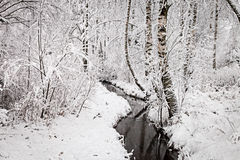 Wintry Creek in the Forest Stock Photography