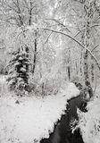 Wintry Creek in the Forest Stock Image