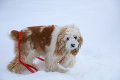Wintry Dog Royalty Free Stock Photo